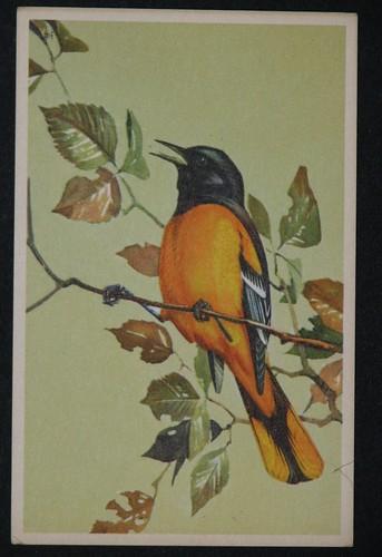 vintage birds 001