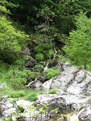 Forest Waters (stefg74) Tags: mountain green nature water forest river free greece olympos olimpos freeuse prionia justrss justrsscom wwwjustrsscom httpwwwjustrsscom stefg74 olimposeu wwwolimposeu