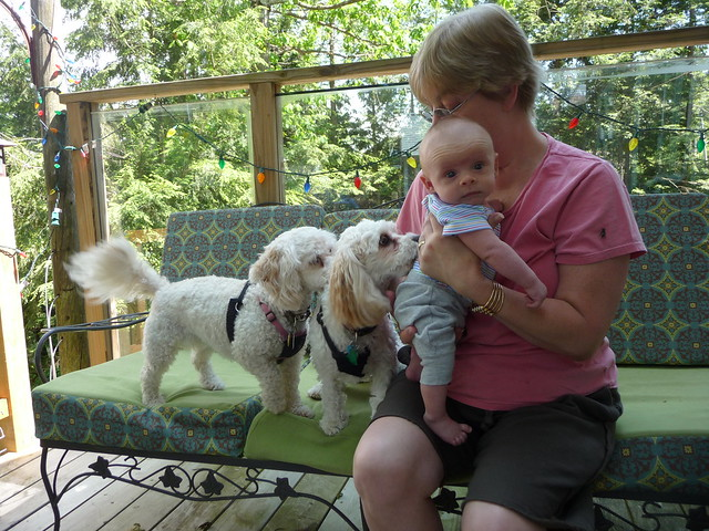 Gramma Terry and the Dogs
