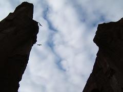 Termas de Caracalla (azulcrema) Tags: roma italia gaviotas termasdecaracalla