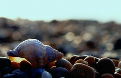 Beach Bokeh (@Doug88888) Tags: sea england sky blur macro beach bokeh shell dslr conch 400d