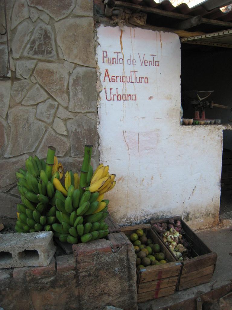 Cuba: fotos del acontecer diario - Página 6 3214147788_d4d39e6b89_b