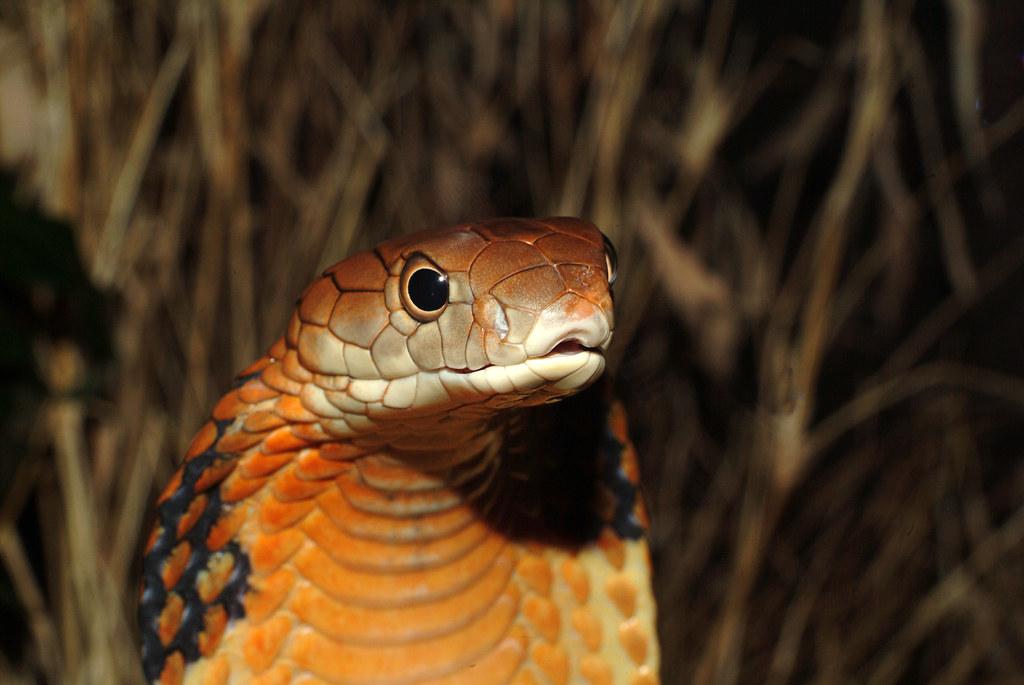 кобра скачать торрент - фото 7