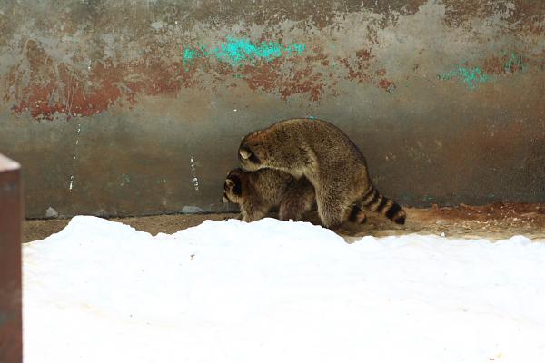 2009北海道-D2-5-昭和新山熊牧場_01.jpg