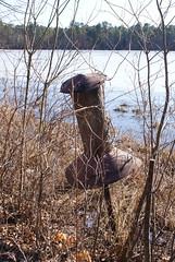 Unexpected Wildlife Refuge (Leroy Hickman Jr--Ravendark Photography) Tags: wildlife unexpected refuge