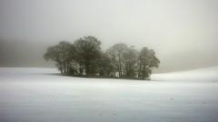 Winter (John Spooner) Tags: trees winter mist snow field lumix countryside hampshire panasonic creativecommons atmospheric copse 416 cotcmostinteresting frostbites i500 lx2