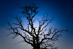 Still Standing - in Blue! (SteenT) Tags: tree solitude naturewatcher steentalmark talmark