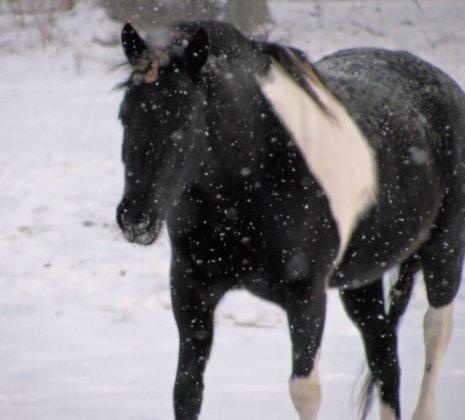 snow horse photo by Adrienne Zwart