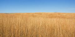 Winter drifts. (terranoesis) Tags: winter nature landscape nebraska waves natural grasses prairie drifts greatplains springcreekprairie