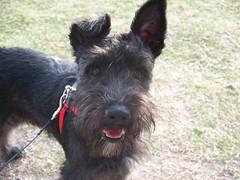 Dobby at the Park