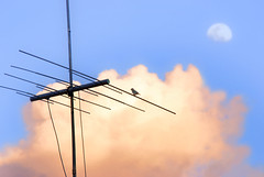 Twitter (Biodisk) Tags: cloud moon bird mond poem passarinho aerial cu socialnetwork kommunikation lua antena network nuvem dach antenne gedicht vogel tweeter comunicao facebook tweet comunication poema   marioquintana vgelchen    twitter        poeminha