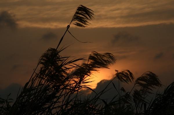 sunset_hori_0037