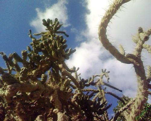 Berkane Cactus