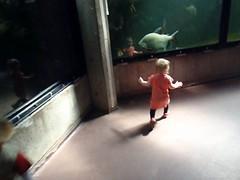 P5080359 (KJogM) Tags: video merle fisk akvarium