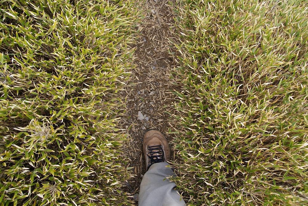 奇萊Day2-79 箭竹草原小徑