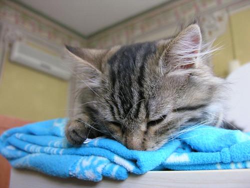 Az emebrek plüsmacskákkal alszanak, a macskák pedig papírral. :)
