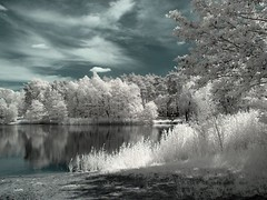Am See/ at the lake (fantasio4) Tags: canon powershot infrared converted g6 infrarot 720nm
