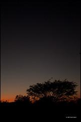 (TomisTaken) Tags: sunset sky tree nature silhouette mxico night landscape mexico noche cielo rbol silueta guerrero puestadelsol copala playaventura