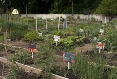 Howell Family Garden
