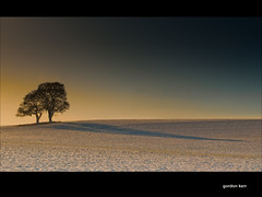 A Treescape
