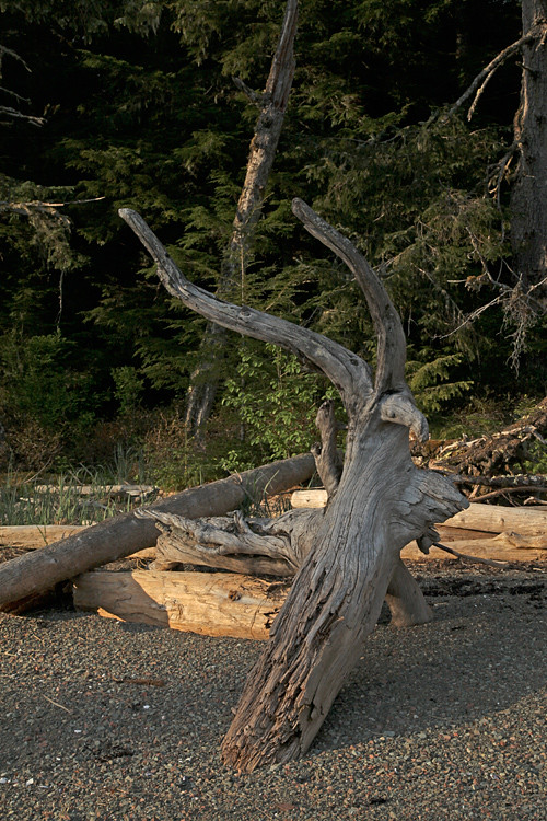 wood on the beach, Kasaan, Alaska