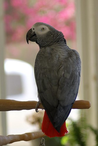 Post image for Bird Cages: African Grey Cage Setup