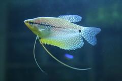 fish aquarium fishtank tropical freshwater