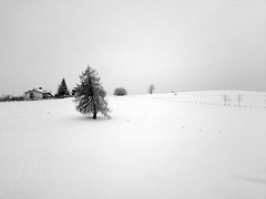 alone. the snow (iseeadarkness) Tags: winter snow neve isolation inverno asiago trescheconca