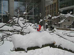 Safetygoat climbs a snowy branch