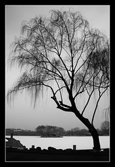 First Snow in Beijing | Houhai Lake (+Lanzi) Tags: china winter beijing  houhai