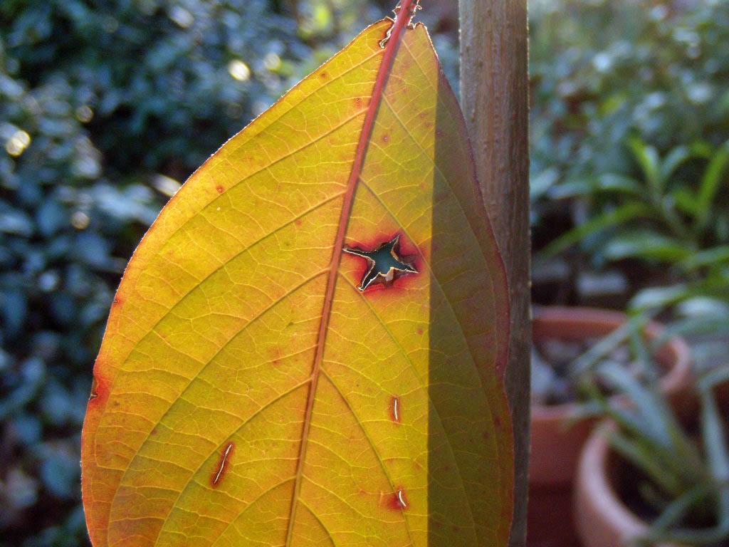 leaf one