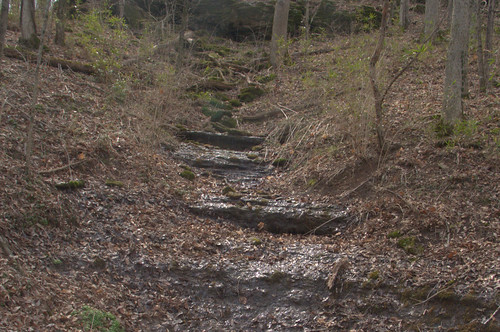 Water Gleams on a Stone Stairway in Percy Warner Park