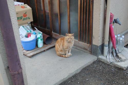 Today's Cat@20090228