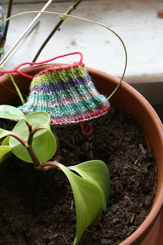 Andrew's socks