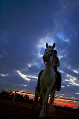 White horse (Romain Pampelonne) Tags: blue sunset sky horse azul caballo cheval atardecer bleu alicante ciel cielo canon350d coucherdesoleil equitacion mutxamiel f2820mm