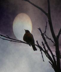 Sunset. Nellie Vin (Nellie Vin) Tags: light sunset tree bird art fog evening peace nellievin thresholdofadream