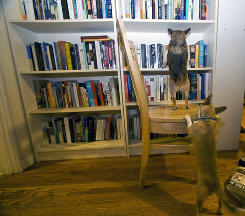 M24: topper helps mole with his book selection