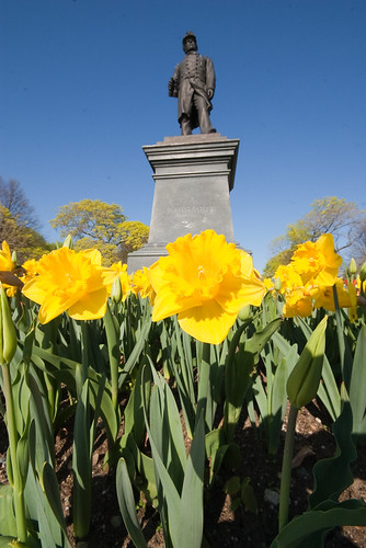 South Boston Daffodils