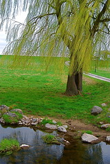 weeping willow (Tomitheos) Tags: portrait toronto ontario canada rain weather rural stream flickr poem niceshot avatar picture optical pic daily photograph harmony urbannature capture now weepingwillow today distillery 2009 shiningstar countryroad lonelytree thunderstorms uxbridge musictomyeyes damncool aclass stockphotography highquality herbaceous awesomeshot 100views10faves onlynature beautifulshot mywinners crystalaward heartsaward betterthangood worldsbestdazzlingshots goldstaraward spiritofphotography flickrballoonaward bytomitheos rainforestink ruralscenicareas
