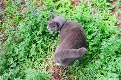 wic's catmint plant (SliderArts) Tags: cat minoltasrt101 catmint wic