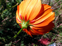 Laranja (Claudia Telles) Tags: flowers insetos insets flres flowerwatcher