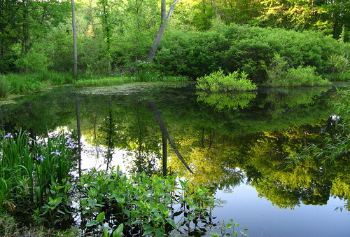 Our Pond in Spring