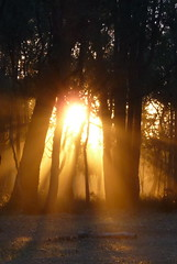 sunbeams in the bush (cyanocorax) Tags: trees sunset sun mist bush reserve australia rays sunbeams kamikamia