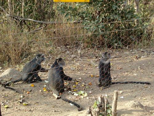 Lilongwe Nature Sanctuary x
