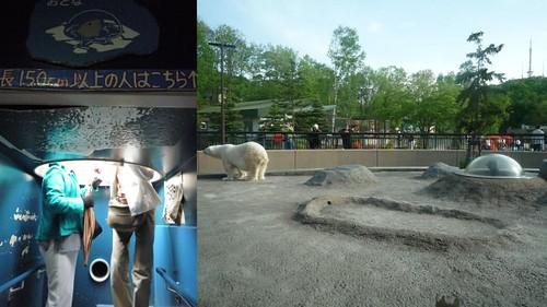 你拍攝的 旭山動物園7。