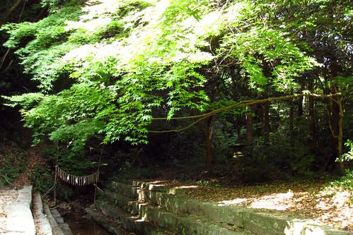 japanese maple tree leaves. Green Japanese Maple Tree Leaves
