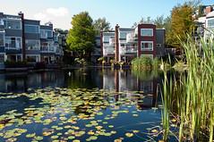 Des-res (_20D5791) ([Rossco]:[www.rgstrachan.com]) Tags: houses lake vancouver island pond apartments granville falsecreek lilypad