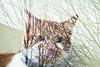 cat (johanna) Tags: glass cat bobi justfoundanoldbackup verybobiindeed