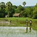 Farm life on Don Khong