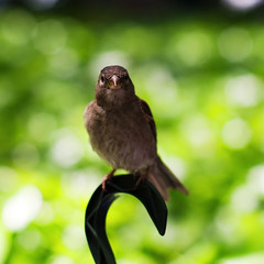 Little Birdie (SloopyNoob) Tags: new york nyc bryantpark nikkor5012ais panasonicgf1